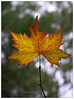 "Automn portrait (@Katerina Log) Tags: leaf automn fall katerinalog outdoor nature natura tree orange yellow park florafauna foliage sonyilce6500 bokhe depthoffield macro portrait smileonsaturday onesingleleaf ""sonyflickraward"