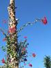 . (_tess_) Tags: marokko المغربalmaghrib tess marrakech anima jardin garden garten