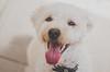 @johnnycashdog (fernandalisboafotografia) Tags: poddle dog dogphoto dogsinsta cao dogslovers 35mm 35mm18 nikon