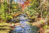 Autumn Stream (macnetdaemon) Tags: autumnleaves autumnal autumn foilage hdr forest beautiful bright colorful lovely greatshot canon 7d markii