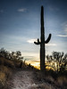 Saguaro Cactus at Dawn 5 (Jae at Wits End) Tags: daybreak daylight sunup sunrise cloudy am rural picturesque light saguarocactus country colors places firstlight hike natural desert nature dawn early landscape outdoor morning plant color view outside colorful multicolored scenic trail sky cactus clouds phoenix morn