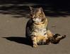 Zoo-Katze/Zoo-Cat (babsbaron) Tags: nature tiere animals zoo katze cat duisburg