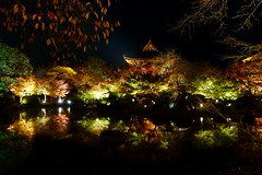 DSC06059 (MrSUIZOU) Tags: 京都 紅葉 ライトアップ kyoto 東寺 五重塔