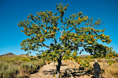 the family chestnut grove in Penela da Beira (Viseu, Portugal) (Gail at Large   Image Legacy) Tags: 2017 peneladabeira portugal castanhas chestnuts gailatlargecom