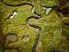 Photo de marécages près de la plage de Mousterlin (Bretagne) (Bap's Photography) Tags: dronie bretagne france french plage béay photographier photographe photo paysage vert green herbe water eau marécage vol ciel sky dji pro mavic fly drone