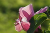 BLAZE OF COLOUR (Fimeli) Tags: atumn herbst nature colors colorfull flowers sonne sun blume makro garten plant pflanze