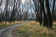 autumn alley of leafless trees (uiriidolgalev) Tags: autumn alley leafless trees