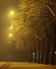 Street lights (Explored) (Miika Myllykangas) Tags: street snow light streetlight streetlamp mood atmosphere yellow city morning dark canon eos 100d 55250mm miikamyllykangas suomi finland kerava rain road trees tree mist snowfall explored