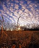 Low November Sun (Dave Linscheid) Tags: weed corn sun sunburst sunset farm rural country agriculture cloud sky texture textured mildnovemberweather november2017 toolwizphotos watonwancounty mn minnesota usa 8mmrokinonlens fisheye