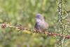 Curruca en su mundo (sergio estevez) Tags: aves bokeh color desenfoque fauna pajaros kenko14x curruca naturaleza nikonafs300mmf4 oxido posadero sergioestevez