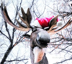 Can't help it, but this made me laugh - he was moving his head and talking and singing too! (evakongshavn) Tags: flickrfriday chainedtothesky reindeer christmas xmas decorations tree winter oslo norge norway
