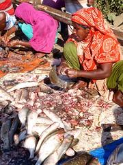 Women cutting fish