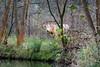 Who disturbes? (KPPG) Tags: 7dwf cow kuh natur nature wald landschaft landscape fauna tierwelt tier animal gras