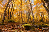 Chestnuts forest in Barbagia (whitenoisephotography1) Tags: chestnuts trees forest tall leaves winter colorful sardinia sardegna fonni barbagia woods autumn