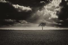 Un signe ? (virginiefort) Tags: afs241204ged d600 arbre bw blackandwhite cloud landscape light lumière nb nikon noiretblanc nuage paysage tree ciel sky champ