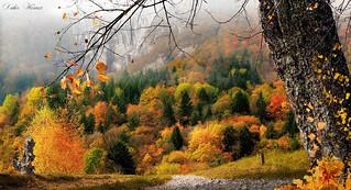 L'automne près du lac d'Annecy
