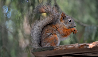 Time For A Peanut #Finland #Squirrel