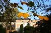 Herfst @ Kruidtuin Leuven (01/11/2017) (Kristel Van Loock) Tags: leuven louvain lovanio lovaina löwen kruidtuin kruidtuinleuven leuvensekruidtuin hortusbotanicuslovaniensis herfst 1november2017 01112017 autumn autunno lautomne fall visitleuven atleuven leveninleuven drieduizend 3000 vlaanderen vlaamsbrabant visitflemishbrabant flemishbrabant brabantflamand brabantefiammingo flanders flandre visitvlaanderen visitflanders visitbelgium toerismevlaamsbrabant toerismevlaanderen toerismeleuven stadleuven leuvencity leuveninbeeld botanicalgarden belgium belgique belgien belgië belgio belgica botanischetuin botanischergarten giardinobotanico jardinbotanique jardinbotaniquedelouvain jardimbotanico jardinbotanico