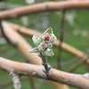 New life on the way (MJ Harbey) Tags: tree flower blossom fruitblossom fruittreeblossom flowerbud buds canada ontario nikon d3300 nikond3300