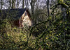 Secret society HQ (Tony Tomlin) Tags: crescentbeach britishcolumbia canada barn brush