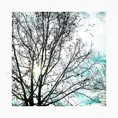 December sycamore. (jeanne.marie.) Tags: textured sky flying birds silhouettes iphone7plus iphoneography tree sycamore autumn december