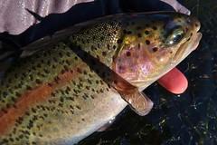 Lovely eye (namhdyk) Tags: canon canonpowershot canonpowershotg7x flyfishing fishing nature