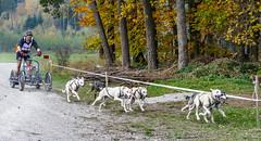 Schlittenhunderennen_137