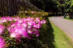 Flores (Pedros0ares) Tags: curitiba parana jardim parque flores museu praça mercado