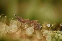 IMG_0767.jpg---vega-5U-105àf4-automne-- web (Monique J.) Tags: automne bokehlicious bulles bokeh bubbles