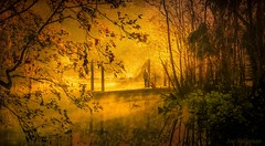 The Search for Heaven Starts Within (JDS Fine Art Photography) Tags: warmth warmcolors light nature naturesbeauty naturalbeauty beauty inspirational heaven lightrays shaftoflight illumination water river creek sunrise spiritual mist misty mistoverwater serenity