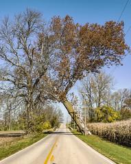 Tree (will139) Tags: slanting ruralindiana atilt leaning ruralroad