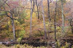 Rock Creek Park 5 Nov 2017 (158) (smata2) Tags: rockcreekpark washingtondc dc nationscapital fall autumn fallfoliage