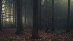 Snowless Winter (Netsrak) Tags: baum eu europa europe forst januar january landschaft natur nebel wald fog forest landscape mist nature tree trees winter woods bäume rheinbach nordrheinwestfalen deutschland de