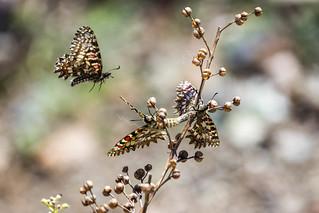 Naturaleza, Mariposas, Tolox, España
