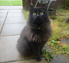 Will you play with me ?! Then I'll go into the house, otherwise I'll stay here in the front garden ... (Caulker) Tags: cat readytoplay front garden rainy morning november 2017