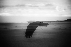 3198 (Elke Kulhawy) Tags: doppelbelichtung monochrome art kunst bw bnw blackandwhite meer coast baltrum dreams perfectday doubleexposure