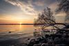 Sunrise Over Madison (pauliefred) Tags: sunrise lake mendota lakemendota capitol wi madison wisconsin unitedstates goldenhour tree uwmadison uw