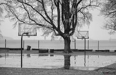 The Court Of Few (Clayton Perry Photoworks) Tags: vancouver bc canada rain fall autumn explorebc explorecanada kitsilano bw blackwhite trees leaves