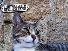 Beware of the cats [Explored] (pefkosmad) Tags: holiday holibobs greece hellas dodecanese greekislands griechenland vacances vacation cat bewareofthecats rhodesoldtown animal explore explored