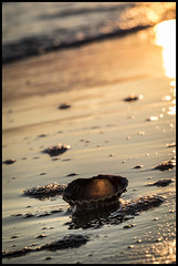 Gleaming Beach (NathalieSt) Tags: beach plage sand sable coquillage shell sunset coucherdesoleil gold doré or golden