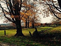 Late Autumn Foliage (Professor Bop) Tags: wilmingtonvermont olympusem1 professorbop drjazz rural foliage autumn fall