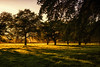 Morning light (Kevin_Jeffries) Tags: landscape farm rural nikon nikkor 500mmf18 golden sheep trees shadows d800 nikonphotography kevinjeffries farmland pasture light morning