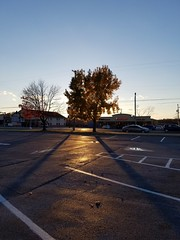Paved in Gold (tomcomjr) Tags: samsung galaxy s7 android phonecamera phonephotos fall autumn evening sunset tree goldenleaves gold yellow black asphalt parkinglot walmart sky blue