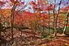 甫喜ヶ峰森林公園の紅葉