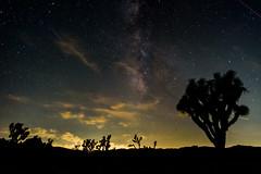 One last night sky shot (rikioscamera) Tags: joshuatreenationalpark d750 desert galaxy joshuatrees landscape lightroom longexposure milkyway nationalparkservice night nightscape nikon sky stars