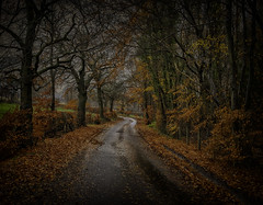 Leaves (xDigital-Dreamsx) Tags: autumn red leaves trees tree rural countryside country landscape road fence hedge wet gold golden naturethroughthelens coth5