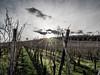 L1040063 (Ledesastre) Tags: alsace est photographie photographe leica dlux109 vignes nature countryside campagne sun lumière