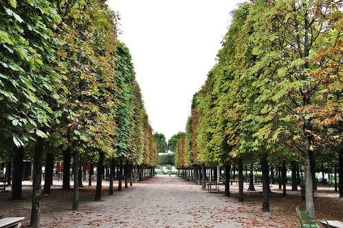 Jardin des Tuileries # 13