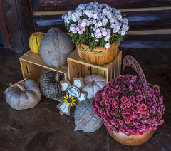 A season for thankfulness (Pejasar) Tags: mums bloom blossoms autumn pumpkins harvesttime logcabin missouri hollister keetercenter entrance falldecor