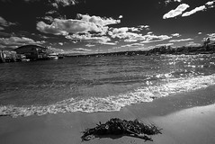 DSC00923 (Damir Govorcin Photography) Tags: seaweed clouds monochrome blackwhite sydney wide angle natural light watsons bay zeiss 1635mm sony a7rii